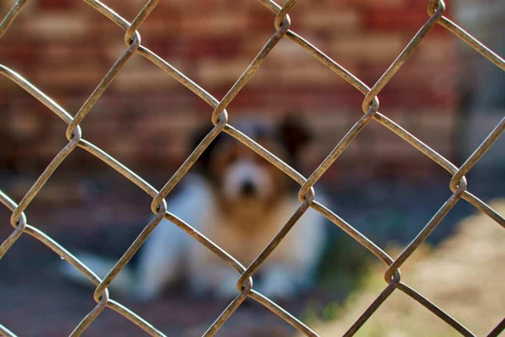 Idaho Dog Bite Lawyer in Idaho